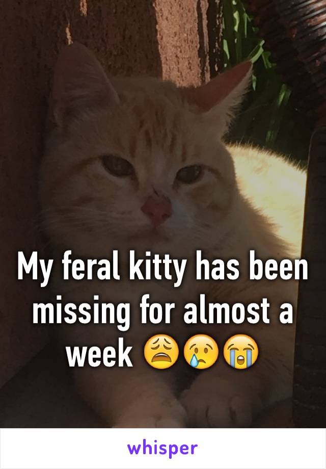 My feral kitty has been missing for almost a week 😩😢😭