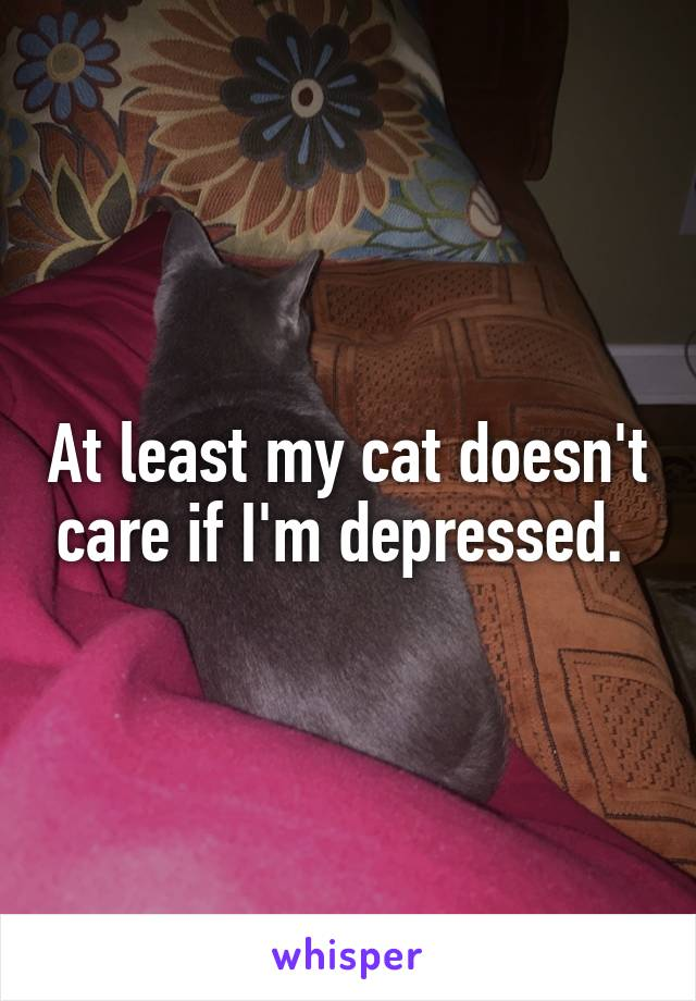 At least my cat doesn't care if I'm depressed.