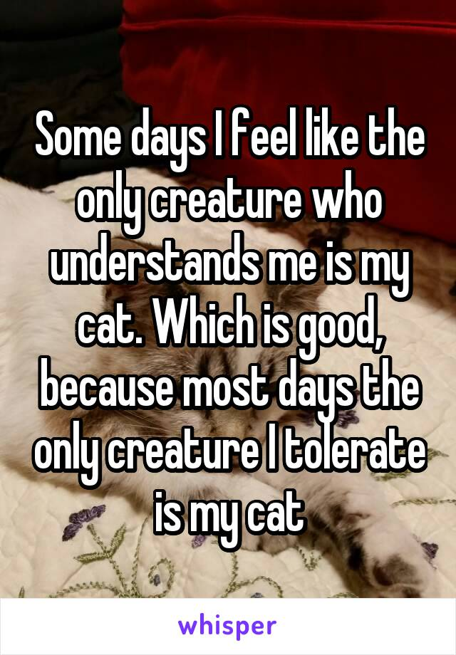 Some days I feel like the only creature who understands me is my cat. Which is good, because most days the only creature I tolerate is my cat