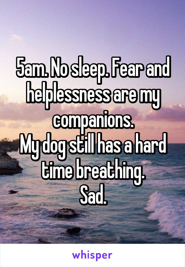 5am. No sleep. Fear and helplessness are my companions. My dog still has a hard time breathing. Sad.
