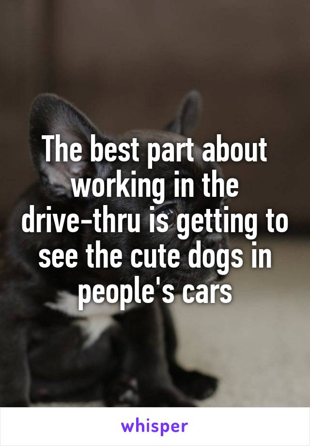 The best part about working in the drive-thru is getting to see the cute dogs in people's cars