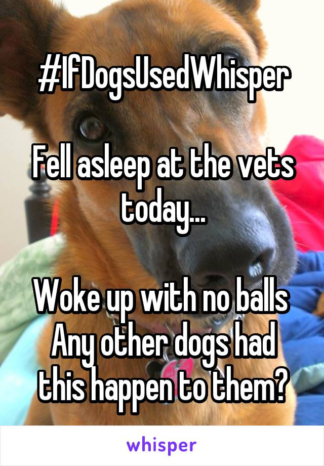 #IfDogsUsedWhisper  Fell asleep at the vets today...  Woke up with no balls  Any other dogs had this happen to them?