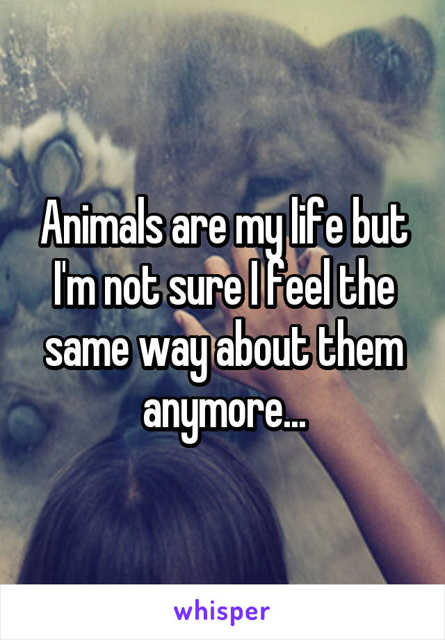 Animals are my life but I'm not sure I feel the same way about them anymore...