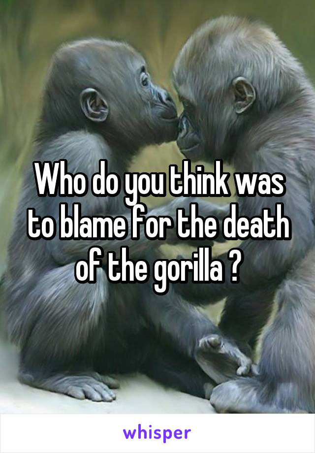 Who do you think was to blame for the death of the gorilla ?