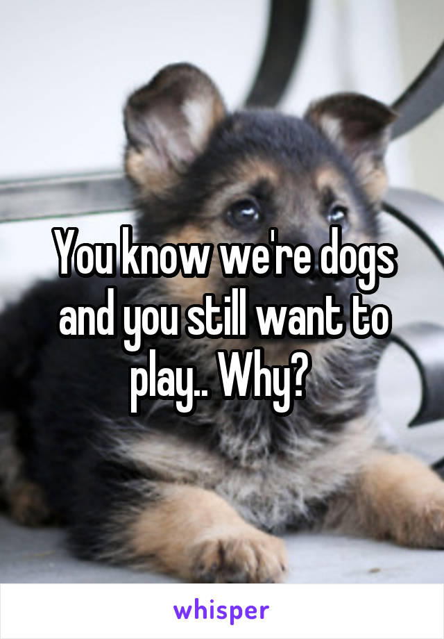 You know we're dogs and you still want to play.. Why?