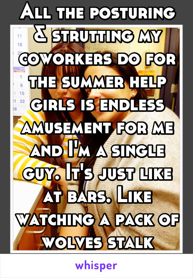 All the posturing & strutting my coworkers do for the summer help girls is endless amusement for me and I'm a single guy. It's just like at bars. Like watching a pack of wolves stalk prey...