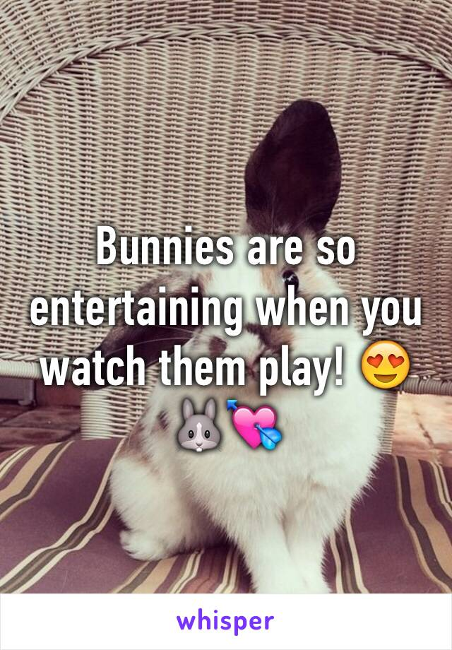Bunnies are so entertaining when you watch them play! 😍🐰💘