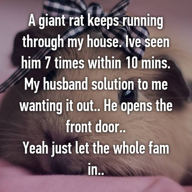 A giant rat keeps running through my house. Ive seen him 7 times within 10 mins. My husband solution to me wanting it out.. He opens the front door..😒 Yeah just let the whole fam in..