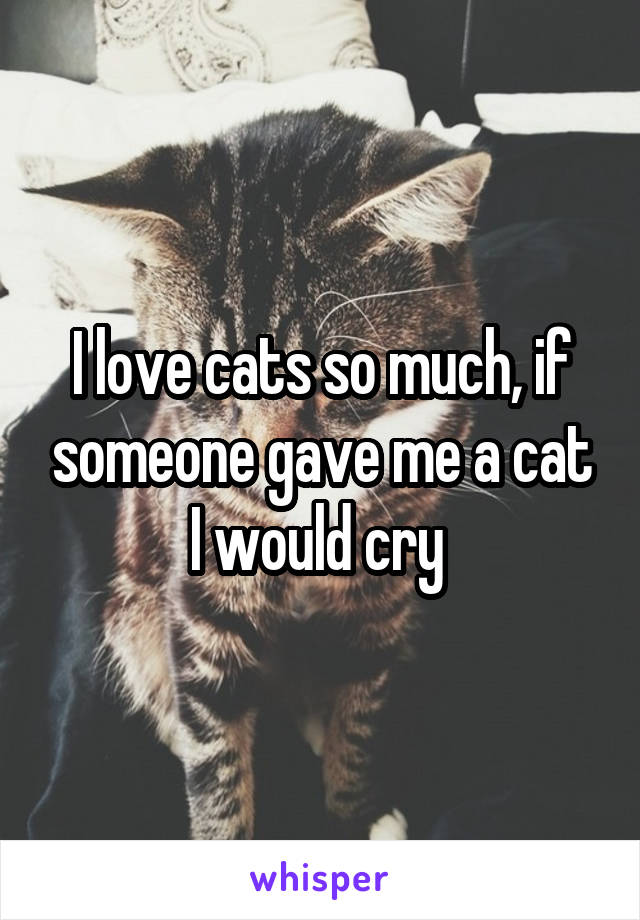 I love cats so much, if someone gave me a cat I would cry