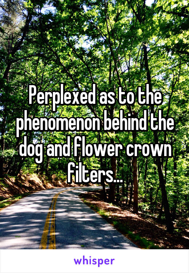 Perplexed as to the phenomenon behind the dog and flower crown filters...