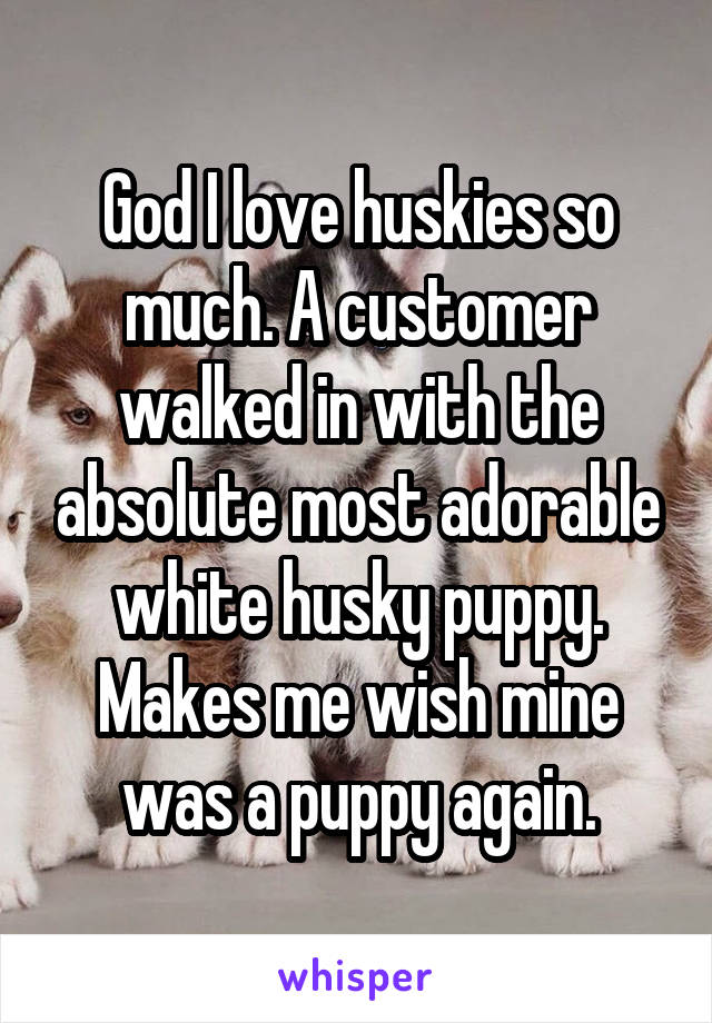 God I love huskies so much. A customer walked in with the absolute most adorable white husky puppy. Makes me wish mine was a puppy again.
