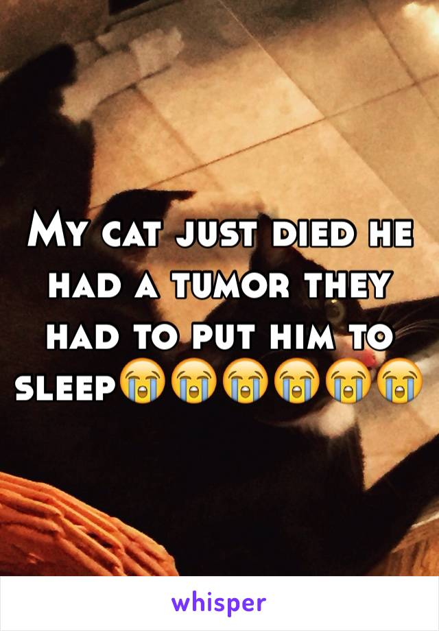 My cat just died he had a tumor they had to put him to sleep😭😭😭😭😭😭