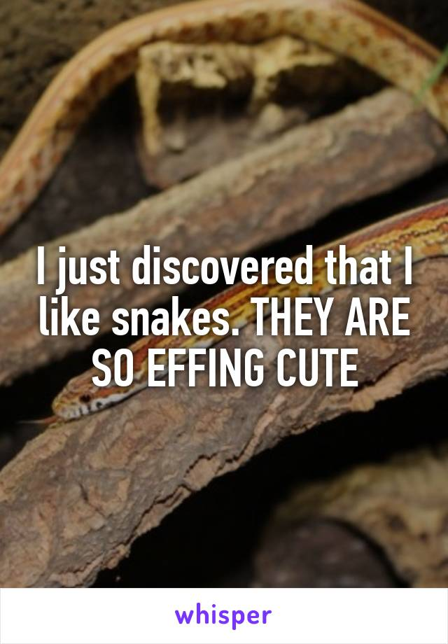 I just discovered that I like snakes. THEY ARE SO EFFING CUTE