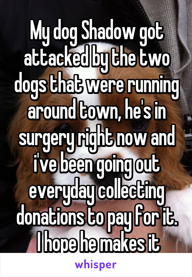 My dog Shadow got attacked by the two dogs that were running around town, he's in surgery right now and i've been going out everyday collecting donations to pay for it.  I hope he makes it