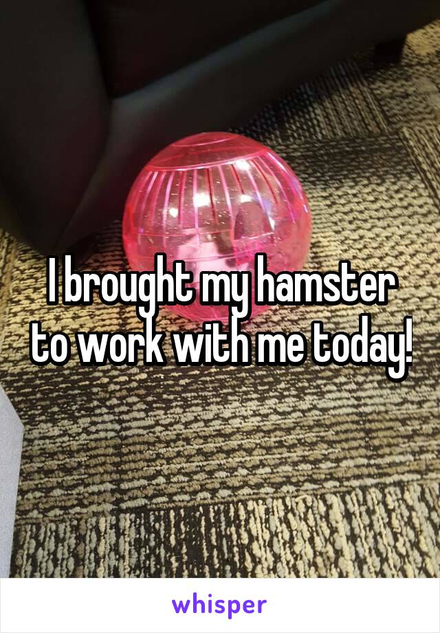 I brought my hamster to work with me today!