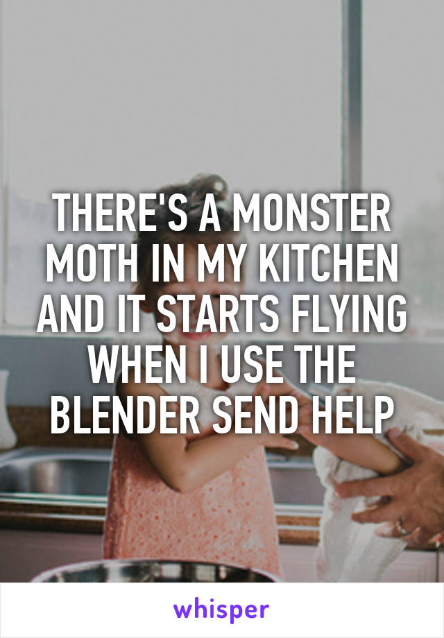 THERE'S A MONSTER MOTH IN MY KITCHEN AND IT STARTS FLYING WHEN I USE THE BLENDER SEND HELP
