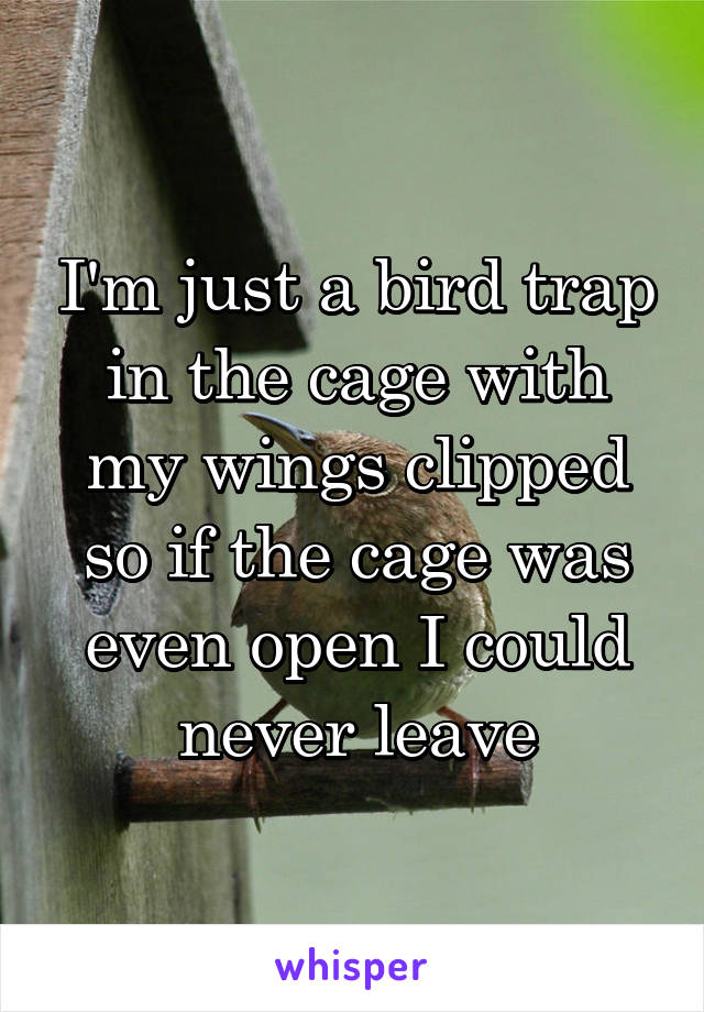 I'm just a bird trap in the cage with my wings clipped so if the cage was even open I could never leave