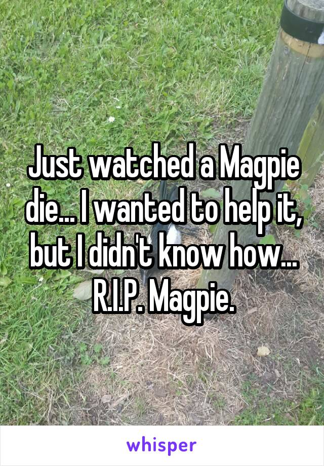 Just watched a Magpie die... I wanted to help it, but I didn't know how... R.I.P. Magpie.