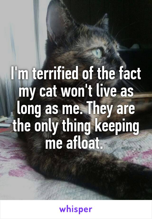 I'm terrified of the fact my cat won't live as long as me. They are the only thing keeping me afloat.