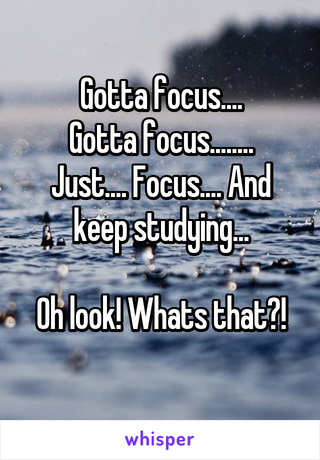 Gotta focus.... Gotta focus........ Just.... Focus.... And keep studying...  Oh look! Whats that?!