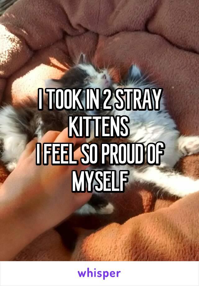 I TOOK IN 2 STRAY KITTENS  I FEEL SO PROUD Of MYSELF