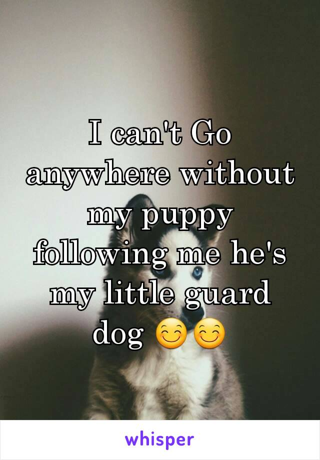 I can't Go anywhere without my puppy following me he's my little guard dog 😊😊