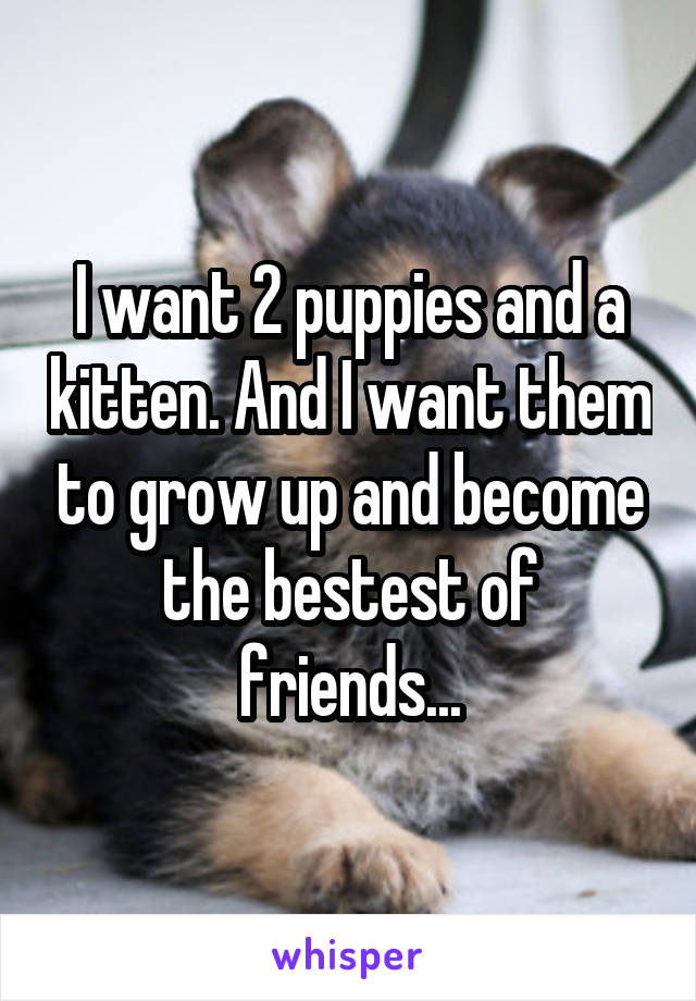 I want 2 puppies and a kitten. And I want them to grow up and become the bestest of friends...
