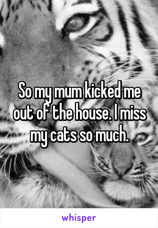 So my mum kicked me out of the house. I miss my cats so much.