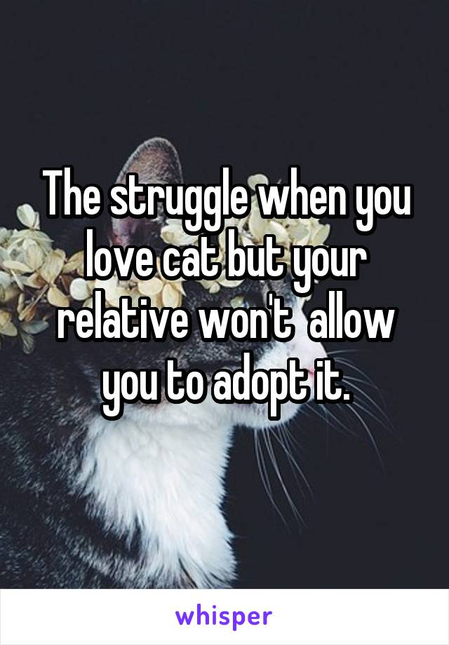 The struggle when you love cat but your relative won't  allow you to adopt it.