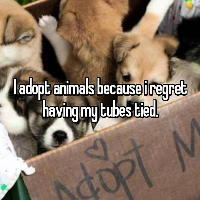 I adopt animals because i regret having my tubes tied.