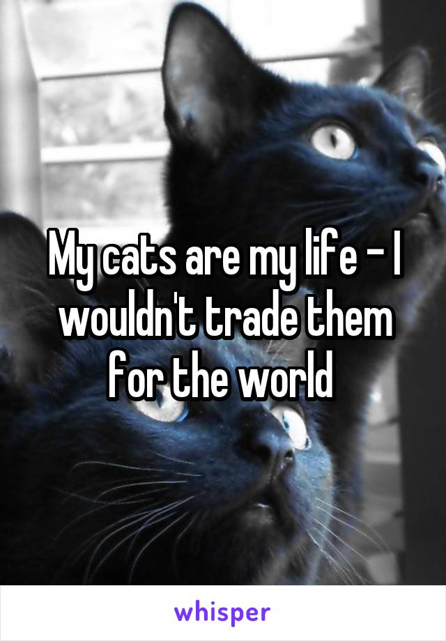 My cats are my life - I wouldn't trade them for the world