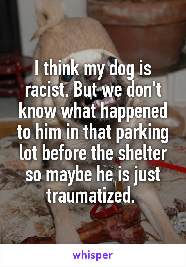 I think my dog is racist. But we don't know what happened to him in that parking lot before the shelter so maybe he is just traumatized.