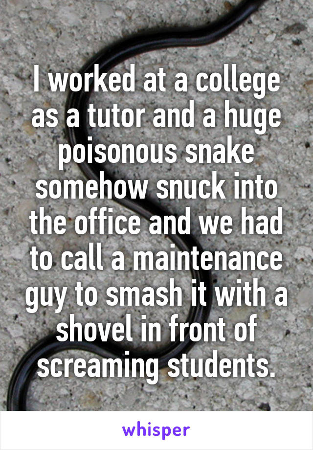 I worked at a college as a tutor and a huge poisonous snake somehow snuck into the office and we had to call a maintenance guy to smash it with a shovel in front of screaming students.