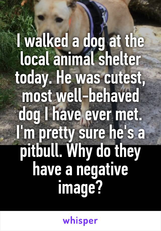 I walked a dog at the local animal shelter today. He was cutest, most well-behaved dog I have ever met. I'm pretty sure he's a pitbull. Why do they have a negative image?
