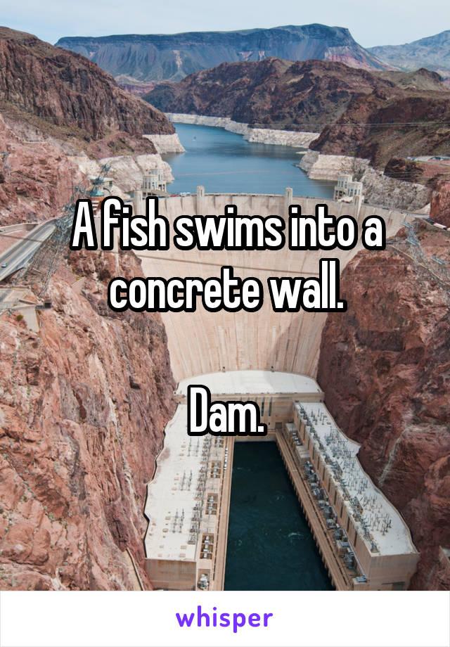 A fish swims into a concrete wall.  Dam.