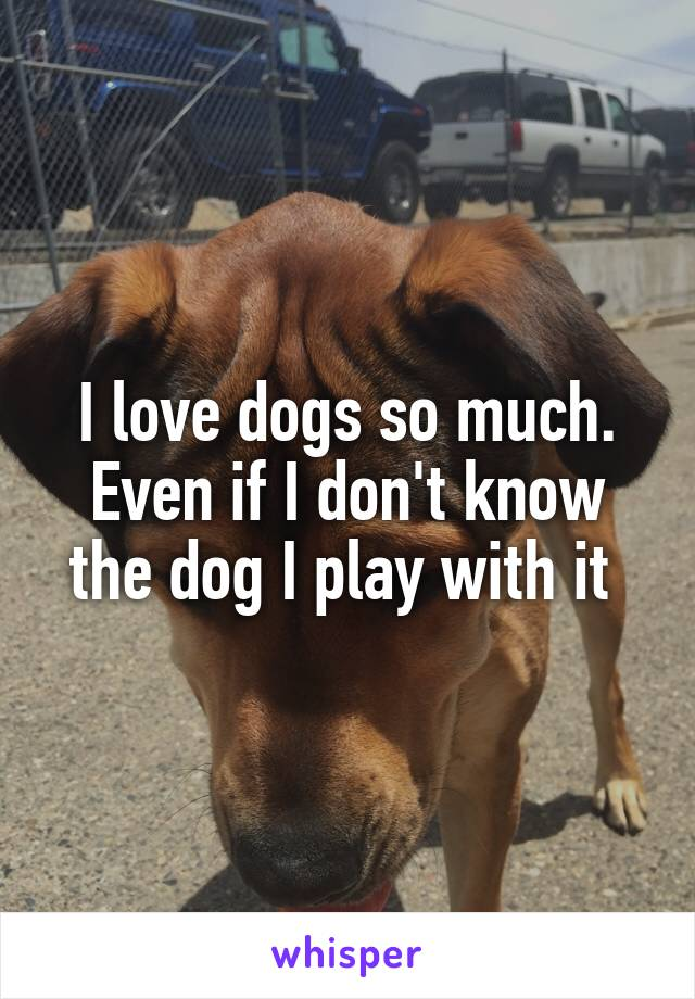 I love dogs so much. Even if I don't know the dog I play with it