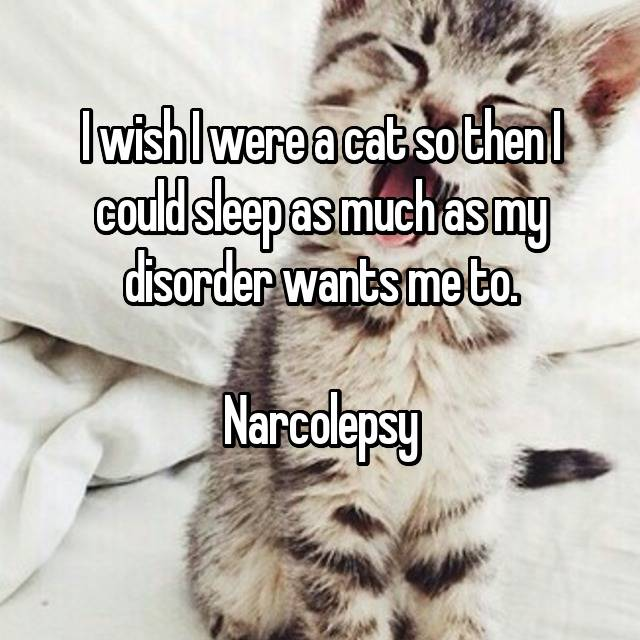 I wish I were a cat so then I could sleep as much as my disorder wants me to.   Narcolepsy  😴