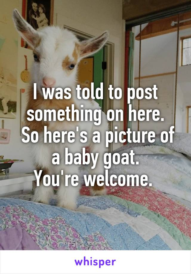 I was told to post something on here.  So here's a picture of a baby goat. You're welcome.