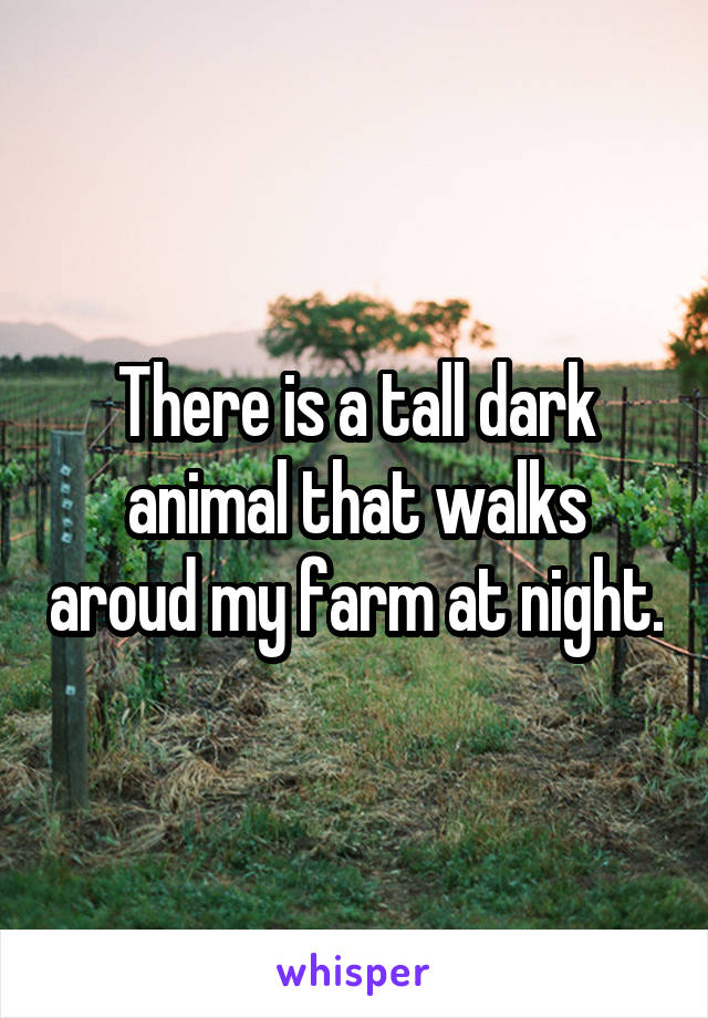 There is a tall dark animal that walks aroud my farm at night.