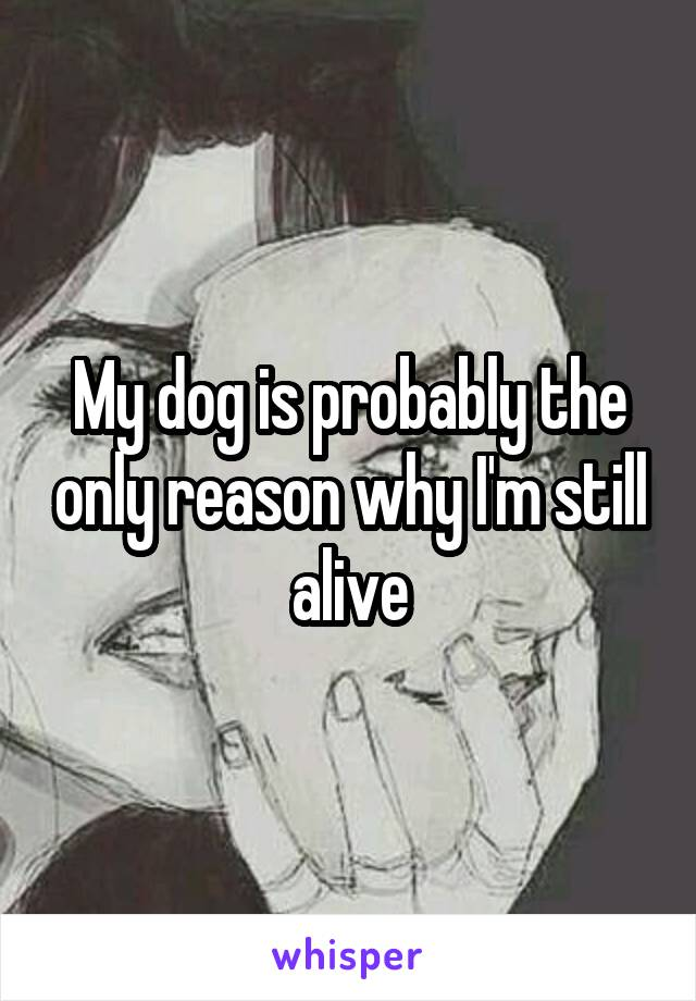 My dog is probably the only reason why I'm still alive
