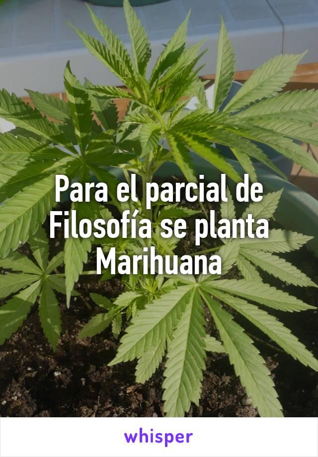 Para el parcial de Filosofía se planta Marihuana