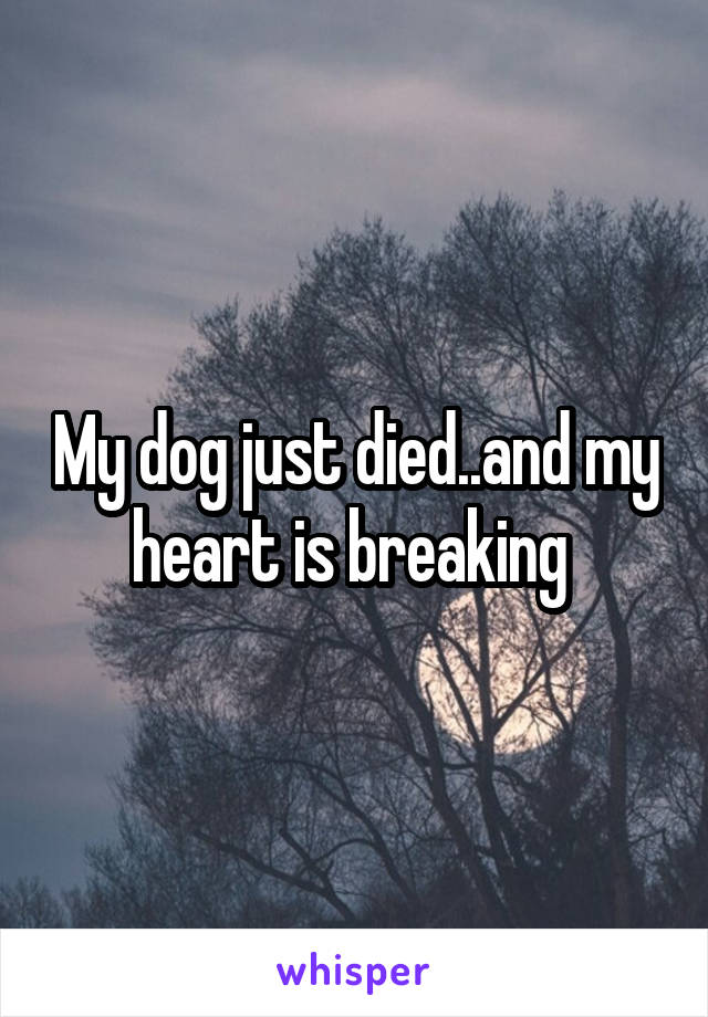 My dog just died..and my heart is breaking