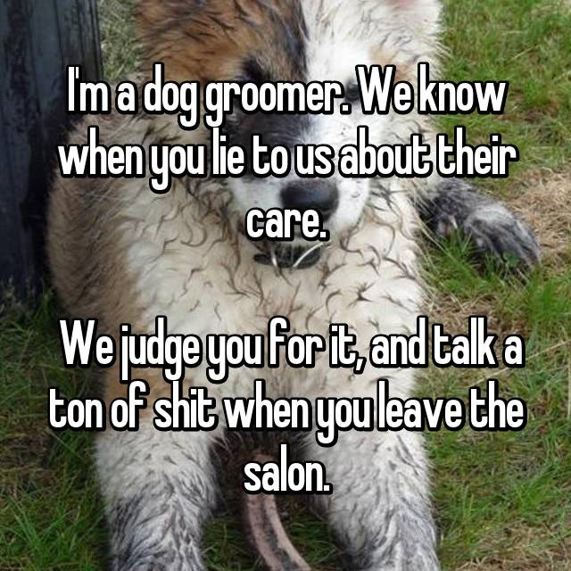 I'm a dog groomer. We know when you lie to us about their care.   We judge you for it, and talk a ton of shit when you leave the salon.