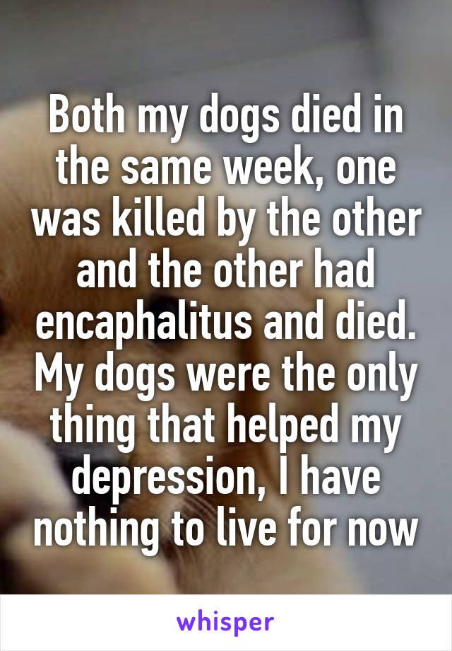 Both my dogs died in the same week, one was killed by the other and the other had encaphalitus and died. My dogs were the only thing that helped my depression, I have nothing to live for now