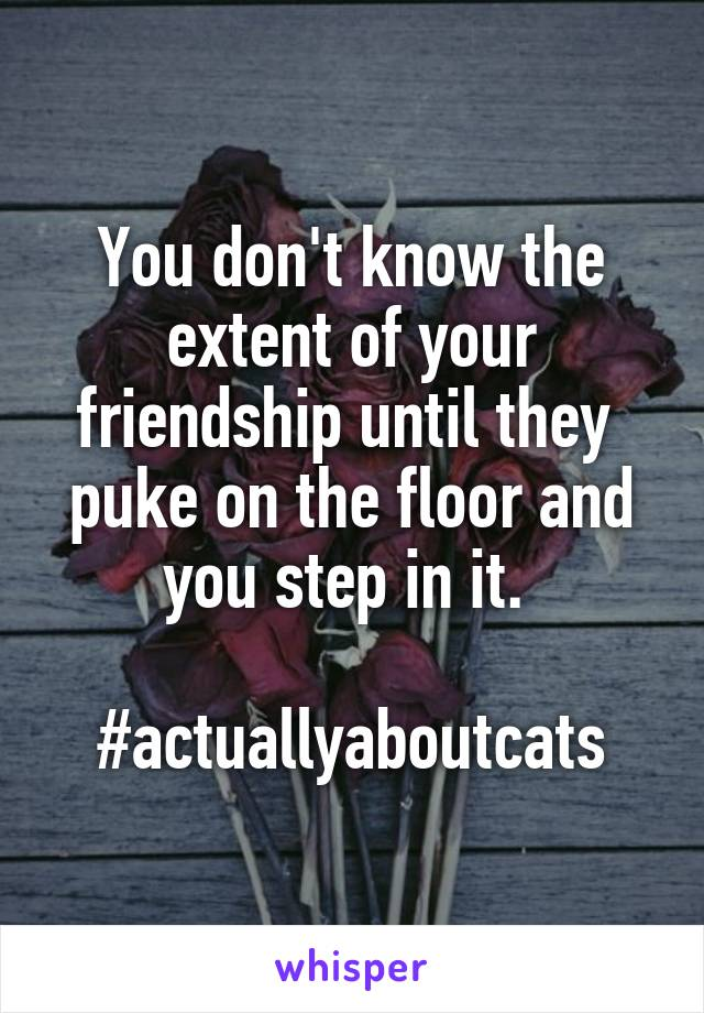 You don't know the extent of your friendship until they  puke on the floor and you step in it.   #actuallyaboutcats