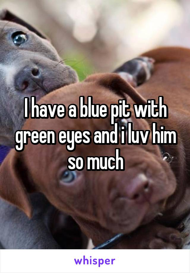 I have a blue pit with green eyes and i luv him so much