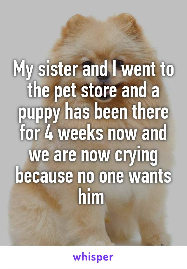My sister and I went to the pet store and a puppy has been there for 4 weeks now and we are now crying because no one wants him