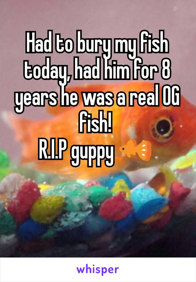 Had to bury my fish today, had him for 8 years he was a real OG fish!  R.I.P guppy 🐠