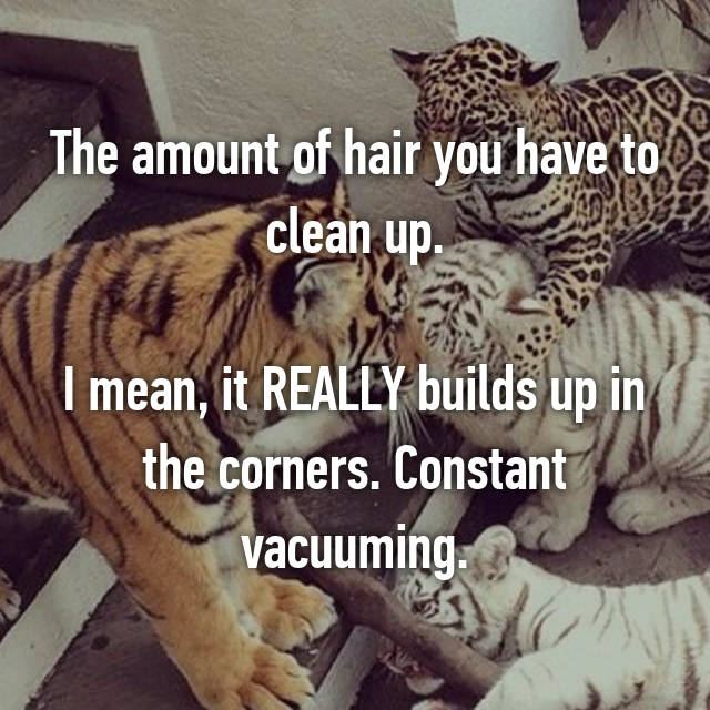The amount of hair you have to clean up.  I mean, it REALLY builds up in the corners. Constant vacuuming.