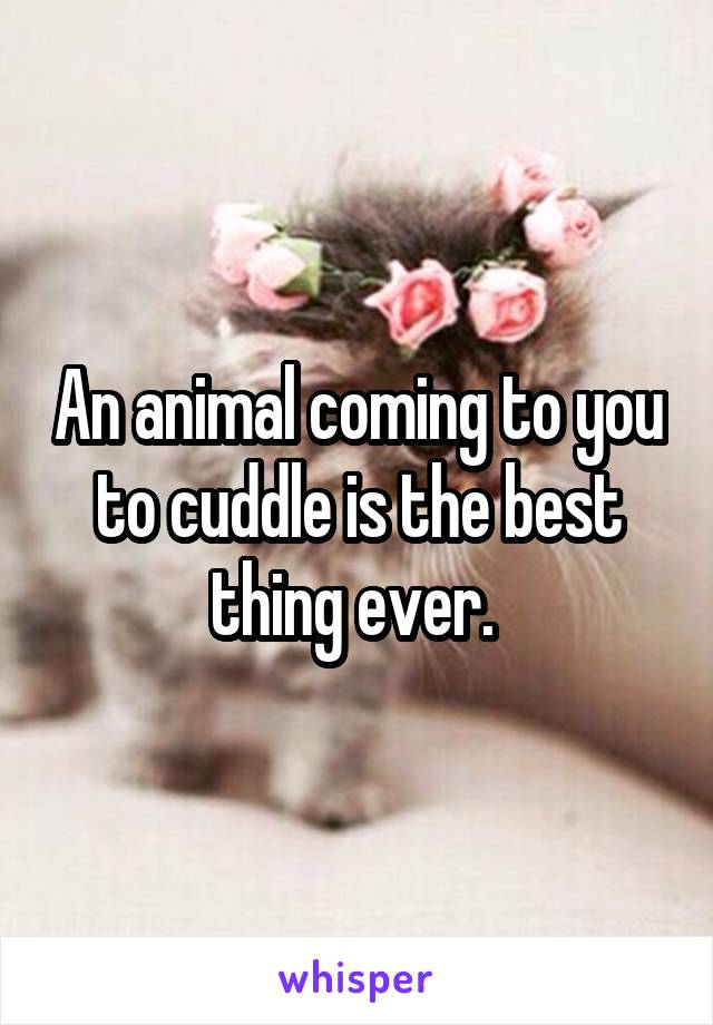 An animal coming to you to cuddle is the best thing ever.